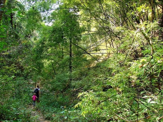 Spacer przez las w Pai - Tajlandia
