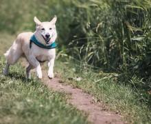 jak zachować się z psem