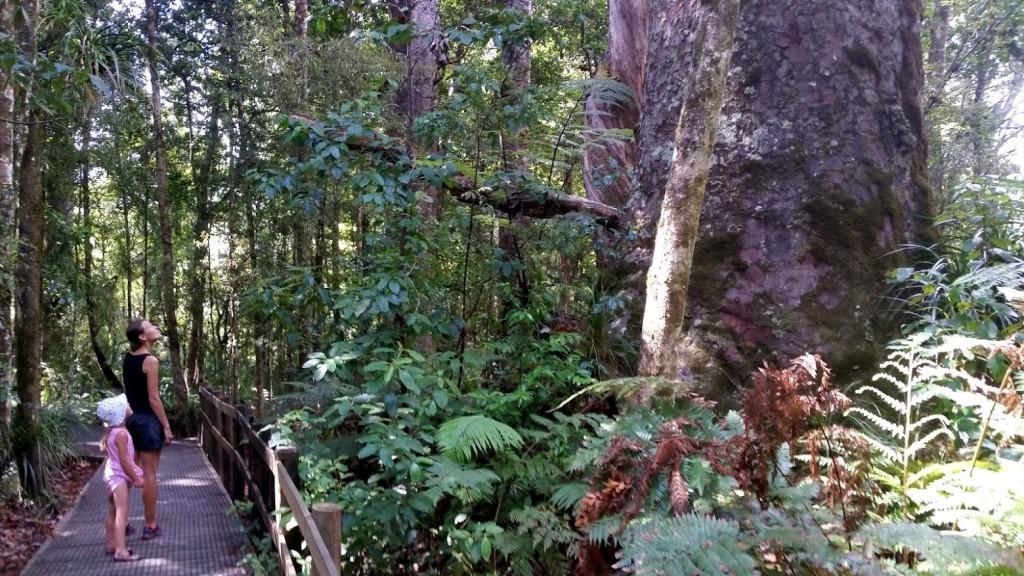 Jedno ze spotkanych drzew przy szlaku