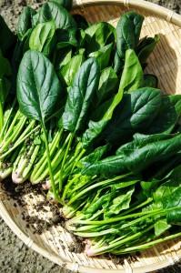 vegetables-1125420_1280