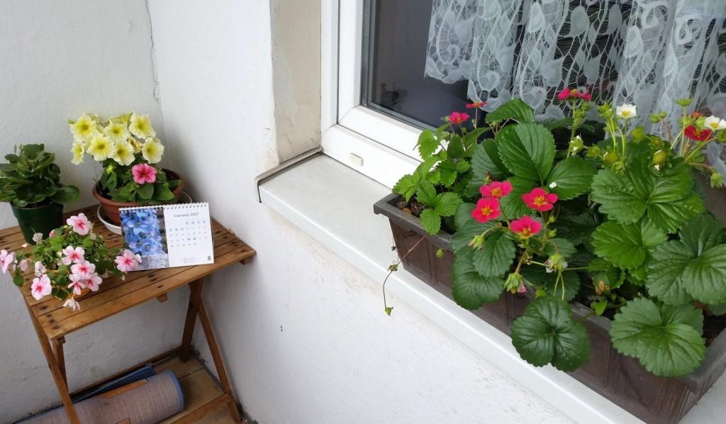 kwiaty na balkon